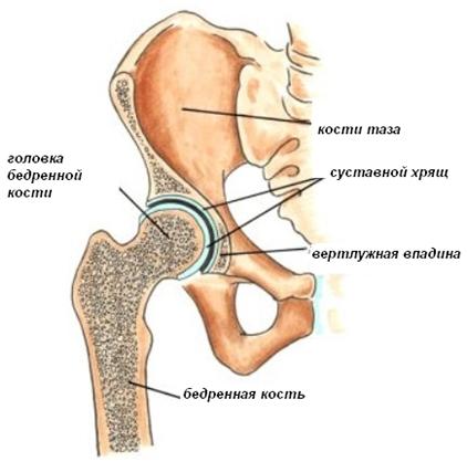 Тотальное эндопротезирование тазобедренного сустава в минске асд2 лечение суставов